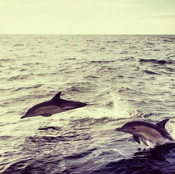 annabel-fairlie-dolphins