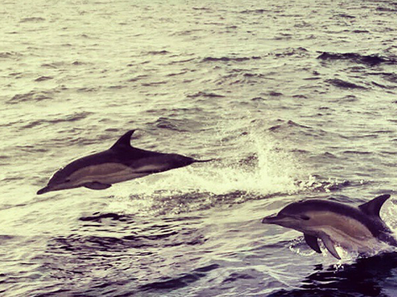 Annabel-Fairlie-dolphins